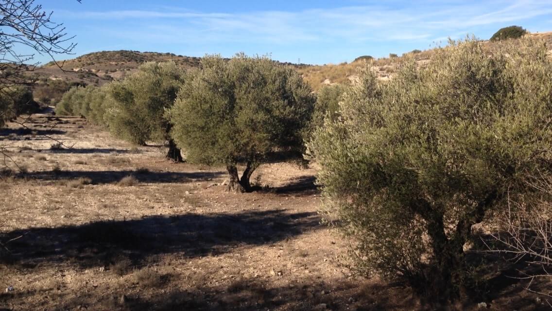 Venta de fincas rusticas valdelaguna 5400 m mi - Precio vallar terreno ...